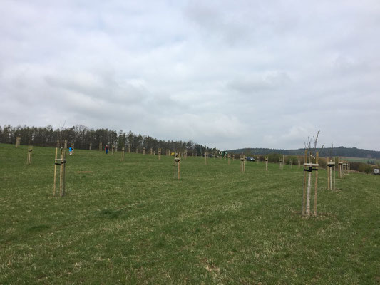 Streuobstwiese 2017
