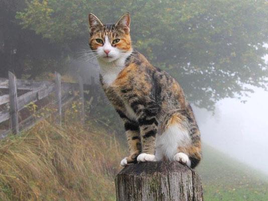 """Katze ©Ferienwohnungen """"Rauchegg"""", Urlaub auf dem Bauernhof, Südtirol, Ultental"""