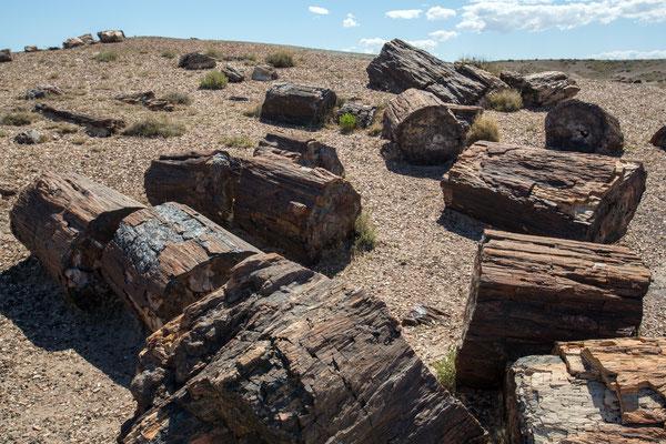 Petrified-Forest-Nationalpark, Arizona