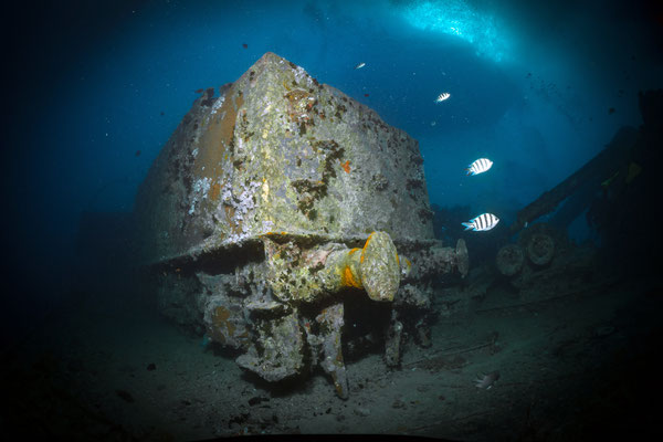 SS Thistlegorm, Red Sea