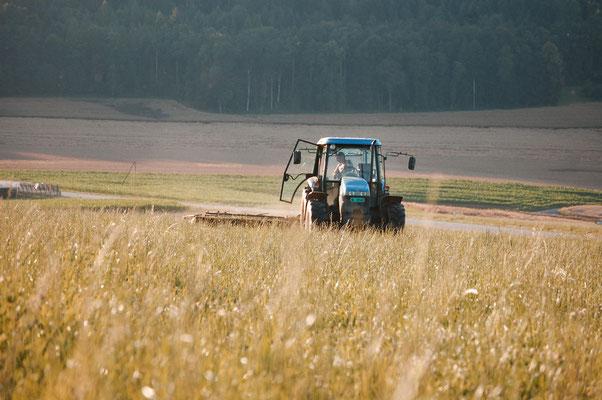 Die Weide auf dem Ebnet wird geschnitten.