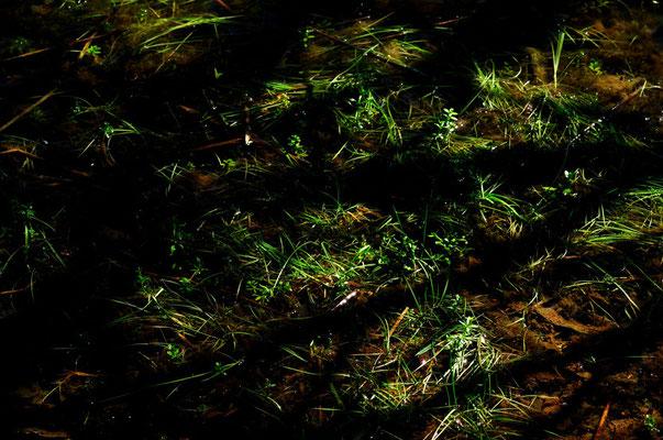 Paysage de la Dombe