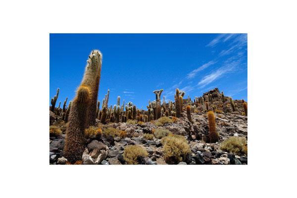 L'Iles aux Cactus