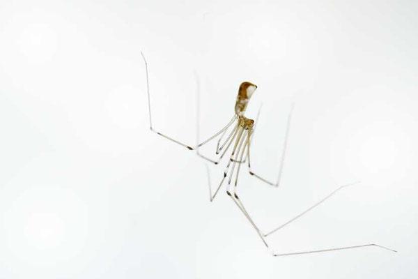 Araignier