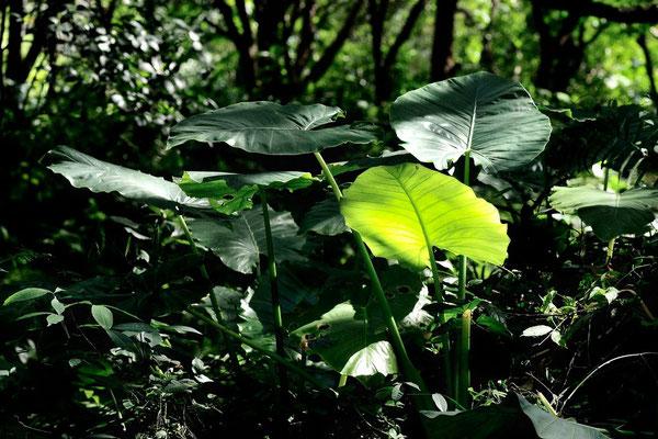 Forêt en Taillande