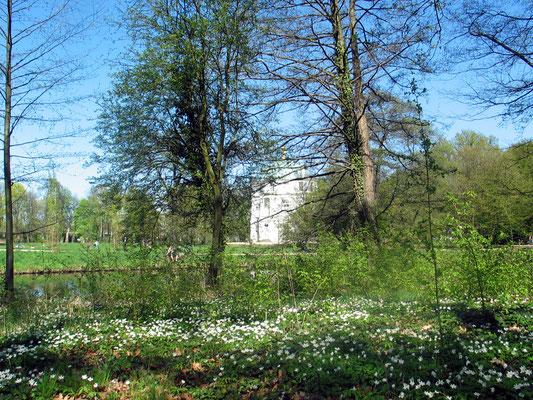 Der Boden bedeckt mit weißen Buschwindröschen, Blick zwischen Bäumen auf Belvedere im Schlossgarten Charlottenburg. Foto: Helga Karl