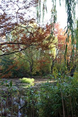 Natur in der Metropole: Teich im Thälmannpark Prenzlauer Berg. Foto: Helga Karl