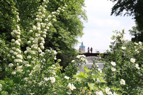 Schloss Charlottenburg im Frühling . Blick vom Schlossgarten Charlottenburg. Foto: Helga Karl
