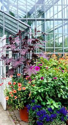 Blühende Pflanzen vor dem Eingang Gewächshaus Botanischer Volkspark Blankenfelde. Foto: Helga Karl