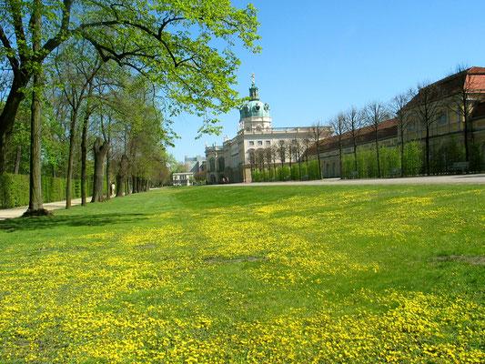 Rasen mit gelben Frühlingsblumen an der Rückseite des Schloss Charlottenburg, rechts die Große Orangerie. Foto: Helga Karl