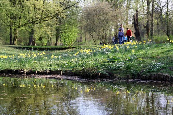 Menschen im Frühling im Schlossgarten Charlottenburg, Nazissen wachsen an der Böschung zum Wasser. Foto: Helga Karl