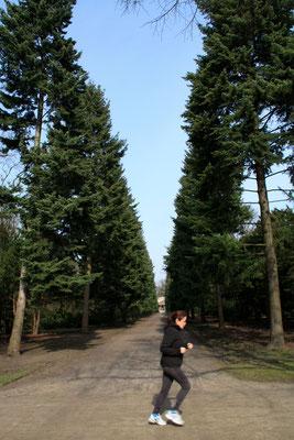 Joggerin läuft an der Baumallee zum Mausoleum vorbei, Schlosspark Charlottenburg. Foto: Helga Karl