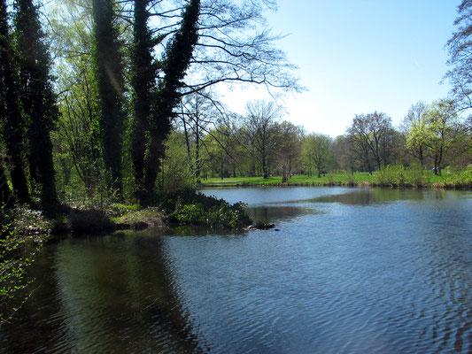 Naturlandschaft im Schlossgarten Charlottenburg, Wasser umschliesst die Spitze der Luiseninsel. Foto: Helga Karl