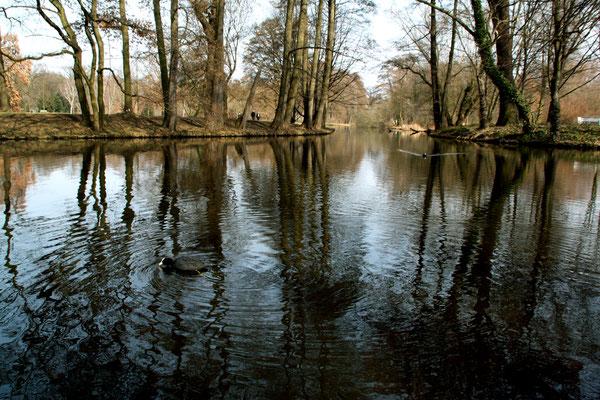 Bäume spiegeln sich im Wasser - Naturlandschaft im Schlosspark Charlottenburg. Foto: Helga Karl im März