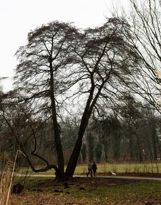 Anfang Februar im Schlosspark Charlottenburg - Spaziergänger mit Hund. Foto: Helga Karl