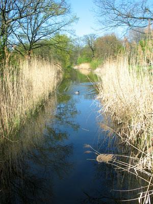Wassergraben um die Luiseninsel im Schlossgarten Charlottenburg im April. Foto: Helga Karl
