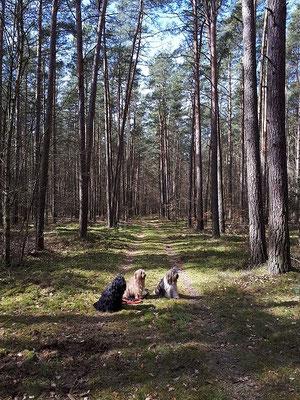 Bya-ra, Milka und Yeshi m Wald von Mewegen
