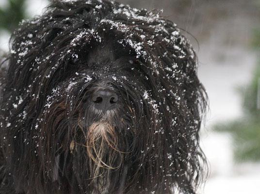 Kar-mi im Schnee - Januar 2017
