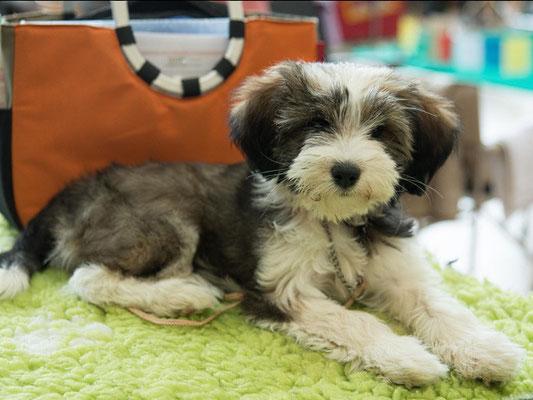 Puppyklasse März: Han-na
