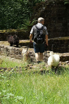 19.7.15 - Wanderung zur Villa Rustica - Gemeinsame Besichtigung