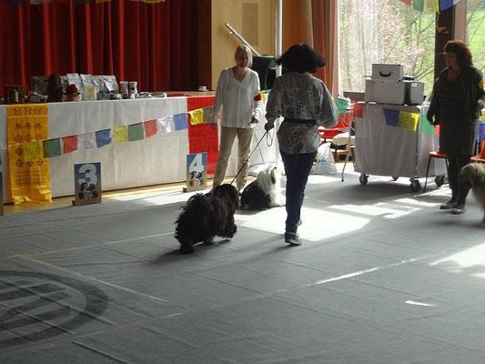 Grasellenbach 25.4.15 - Yeshi beim Laufen