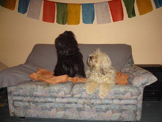Die Geschwister auf der Couch
