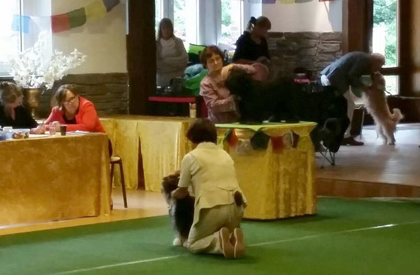 KTR-Spezialausstellung Werl 2015 - Yeshi in der Zwischenklasse Rüden