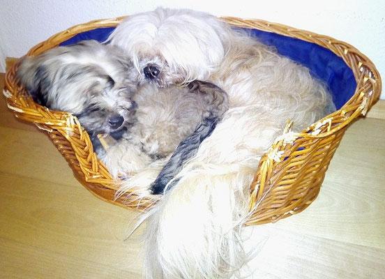 Gemma und Alf im August 2016