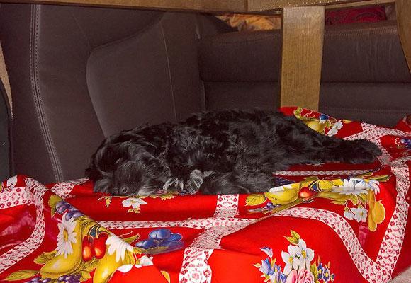Ein Bettchen für die Prinzessin