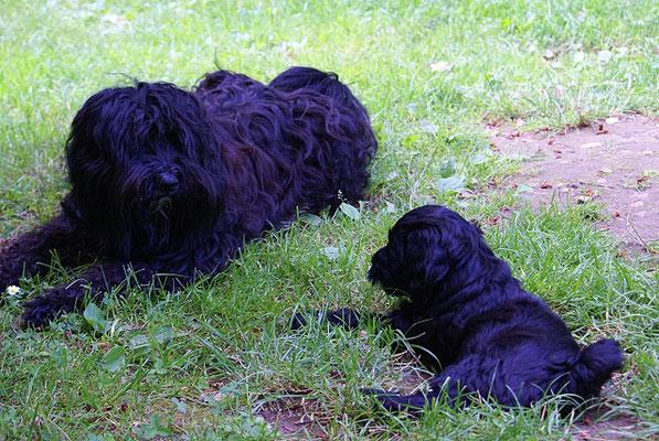G-Wurf - Ga-la - 7 Wochen alt - im Garten mit Tante Kar-mi