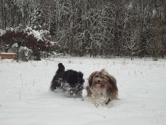Yeshi und Milka im Schnee - November 2015