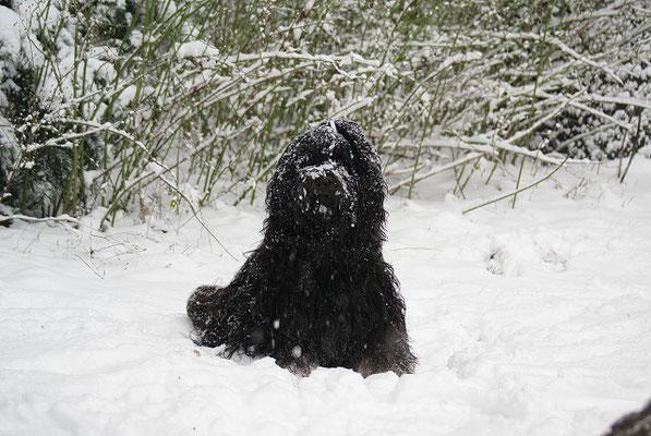 Schneebärchen