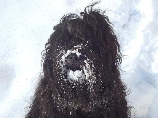 Wieder mal Schneeschieber gespielt, der Yeshi-Bub