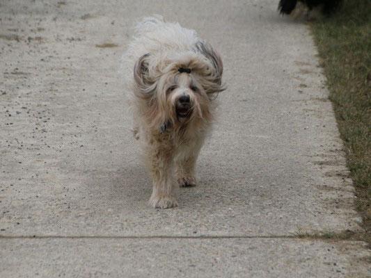 Fiona beim Spaziergang
