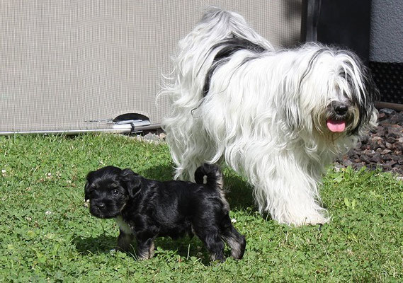 An-Dha-Na-I-Wurf - 5 Wochen alt - Ishan mit Mama