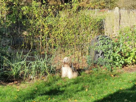 Milka und ihr Garten
