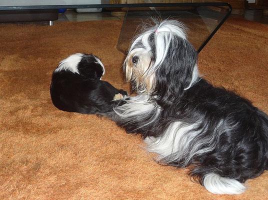 Baby Lisha mit Mama Ayana. März 2015