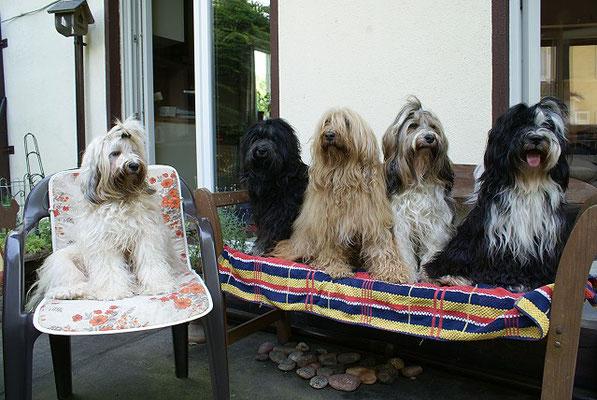 Familienidylle - Fiona, Yeshi, Bya-ra, Milka und Lisha - Juni 2016