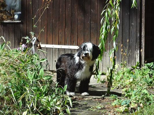 Lisha im Garten