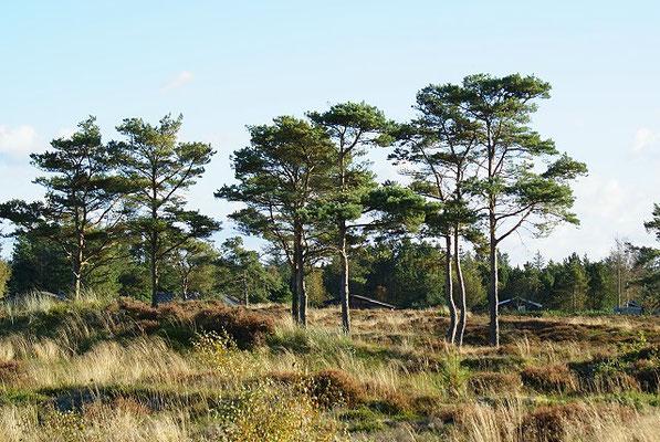 Dänemark 2015 - Heidelandschaft bei unserem Haus