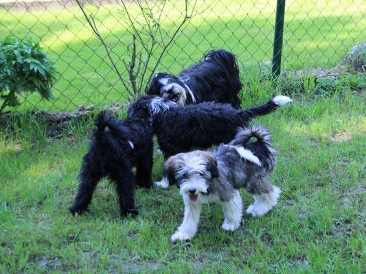 Lisha mit Santi, Yaro und Han-na