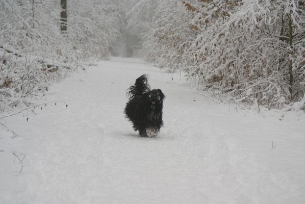 Yeshi im Winterwald