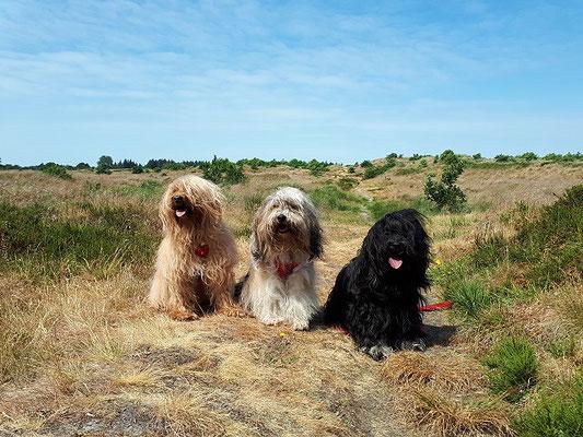 Bya-ra, Milka und Yeshi in den Süderlügumer Binnendünen
