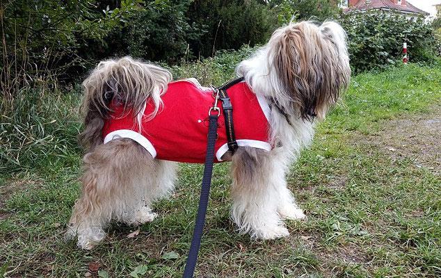 Très chic! Milka im Dog-Fashion-OP-Anzug