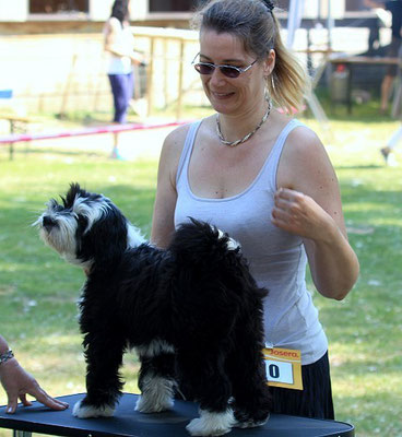 Lisha in Groß-Gerau 7.6.15 Puppy-Klasse