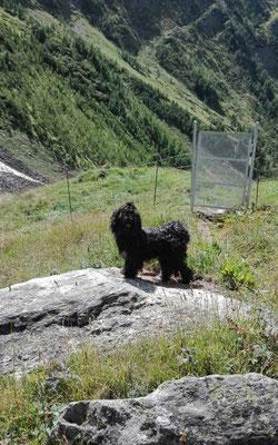 Yeshis Sohn Joshi im Urlaub in der Schweiz