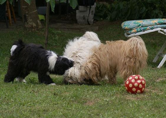 19.7.15 - Nach der Wanderung im Garten - Lisha, Fiona und Bya-ra beim Spielen
