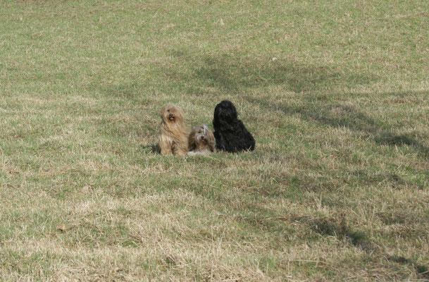 Bya-ra, Milka und Yeshi nahe der polnischen Grenze