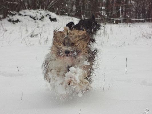 Milka-Rennsemmel hat Spaß im Schnee - November 2015