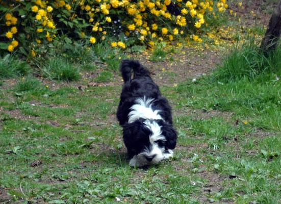 Lisha beim Erkunden unseres Gartens